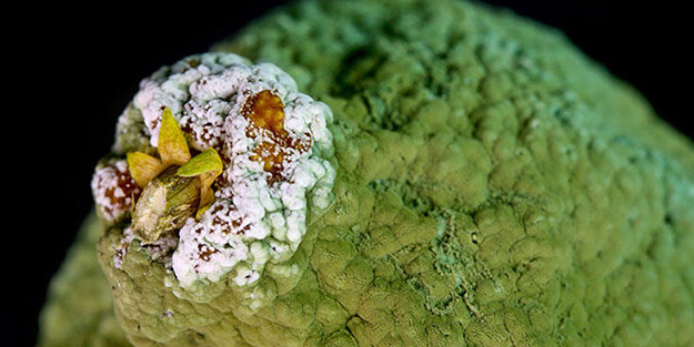 Yiyeceklerdeki gizli tehlike: Aflatoksin! Kansere neden oluyor