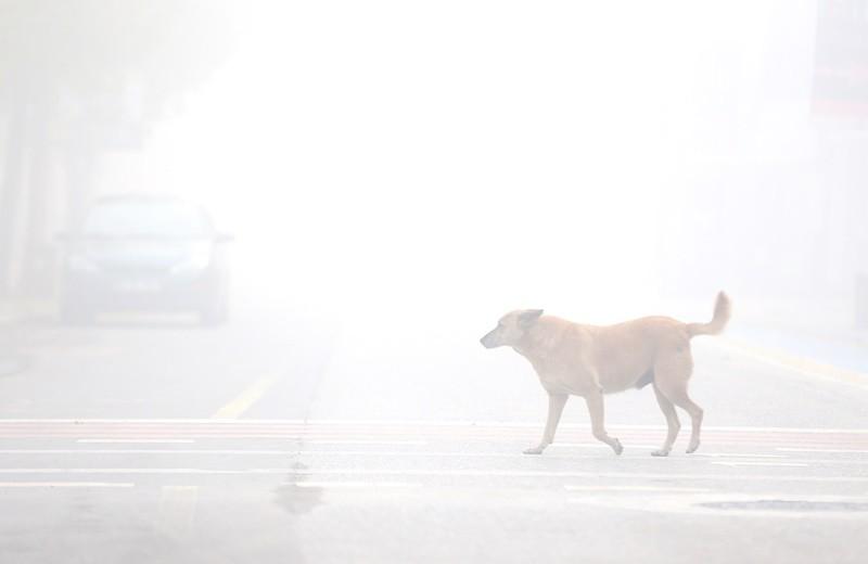 Yoğun sis böyle görüntülendi!