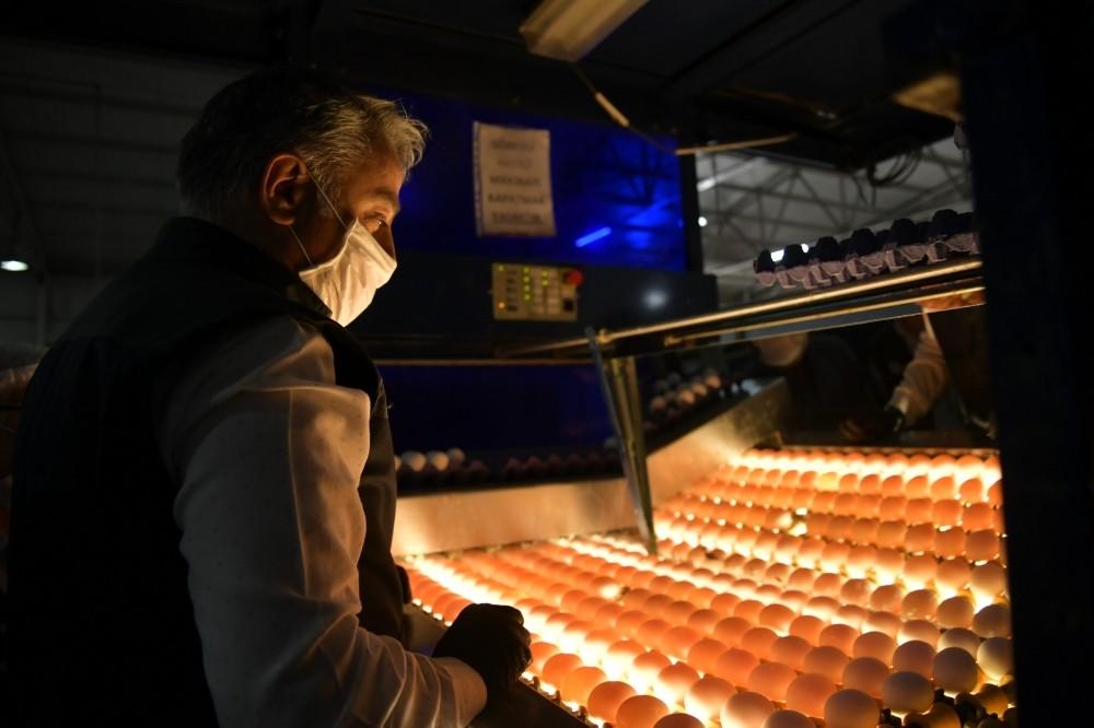 Yumurta ihracatı ülke değiştiriyor
