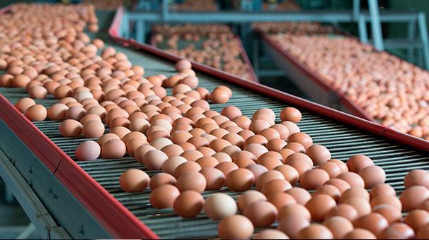 Yumurta ihracatı yüzde 59 arttı!