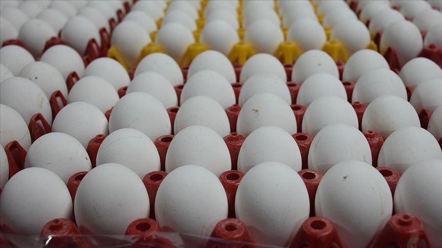 Yumurta üreticileri için bir 'kapı' kapanırken diğerleri açılıyor