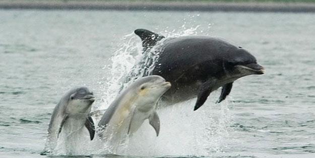 Yunus balıklarının yeni bir yeteneği keşfedildi