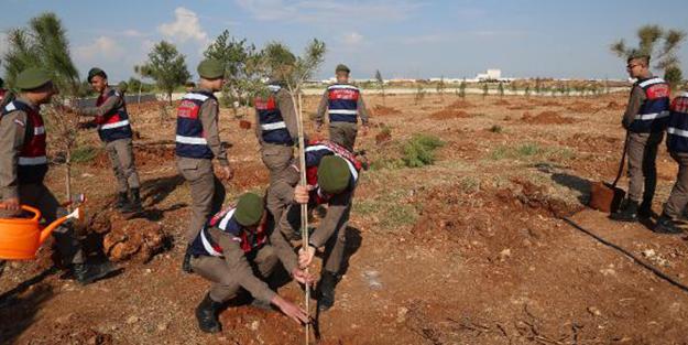 Zeytin Dalı Harekatı'nın ilk Şehidine hatıra ormanı!