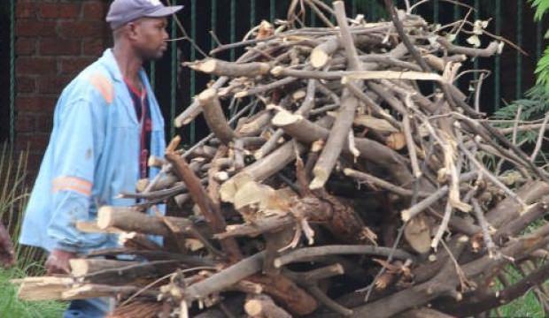 Zimbabve'de elektrikleri kesilen halk, yakacak için ağaç kesiyor
