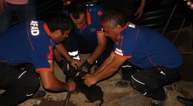 Zonguldak'ta sondaj kuyusuna düşen yavru köpek kurtarıldı