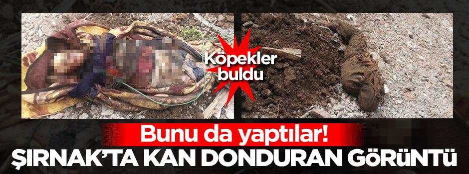 Şırnak'ta kan donduran görüntü! Köpekler buldu