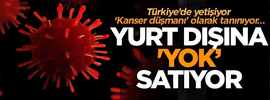 Türkiye'de yetişiyor 'kanser düşmanı' olarak tanınıyor... Yurt dışına 'Yok satıyor'