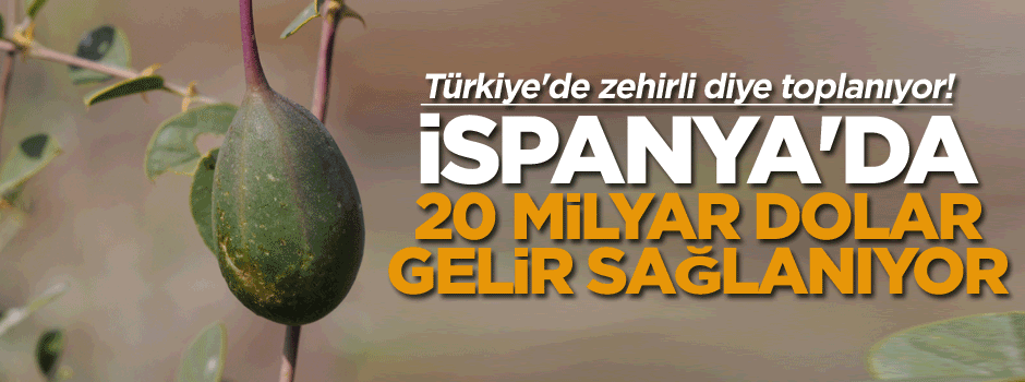 Türkiye'de zehirli diye yasak, İspanya'da 20 milyar dolar gelir elde ediliyor