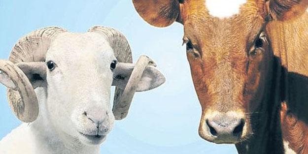 Kurbanlık hayvanı elektrik veya narkozla bayıltarak kesmek caiz midir?
