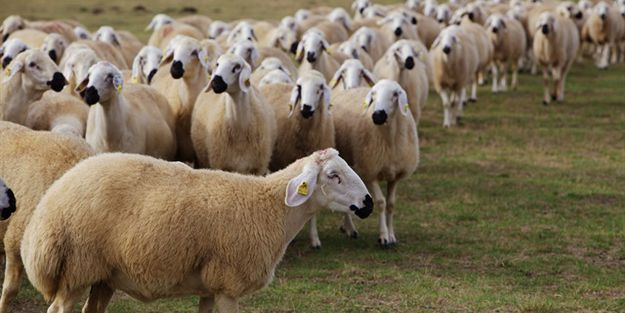 Sağlıklı et tüketimi için dikkat edilmesi gereken hususlar nelerdir?