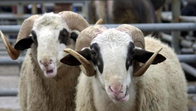 Kurbanda fazla et tüketiminin sebebiyet vereceği rahatsızlıklar nelerdir?