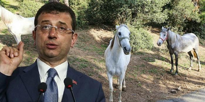 Adalar'daki kayıp yüzlerce atın hesabını veremeyen CHP'li İmamoğlu! İBB'de 'Atlı Zabıta' dönemi