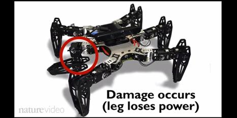 Ayağı sakatlansa da yürümeye devam eden robot