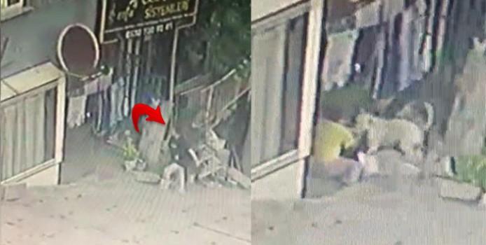 Başakşehir'de 16 yaşındaki kıza pitbullar saldırdı