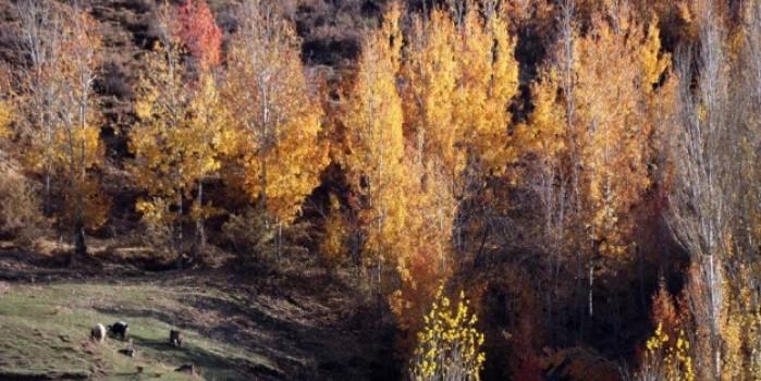 Bitlis'ten sonbahar güzelliği