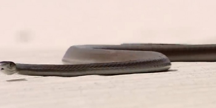 Bomba araştırma sırrı ortaya çıkardı! Uçan yılanlar neyin habercisi?