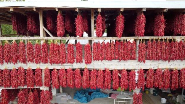''Çukurören biberi''nde kurutma mesaisi köyü adeta kırmızıya boyuyor