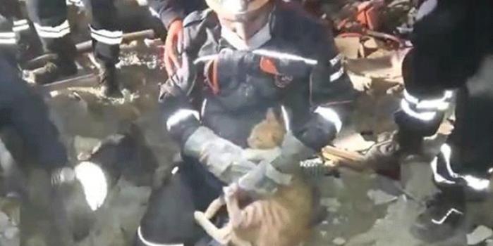 Depremde enkaz altında kalan kedi böyle kurtarıldı