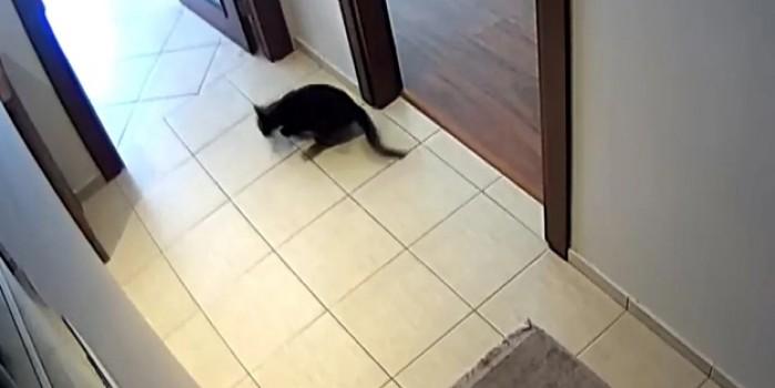Dikkat çeken görüntüler: Kedinin deprem tepkisi