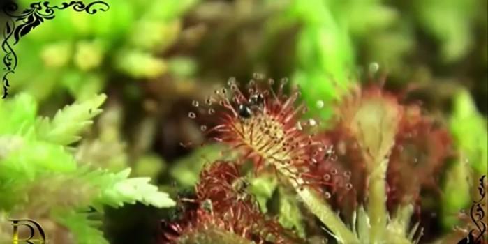 Dünyanın şaşırtan en garip 10 bitki türü