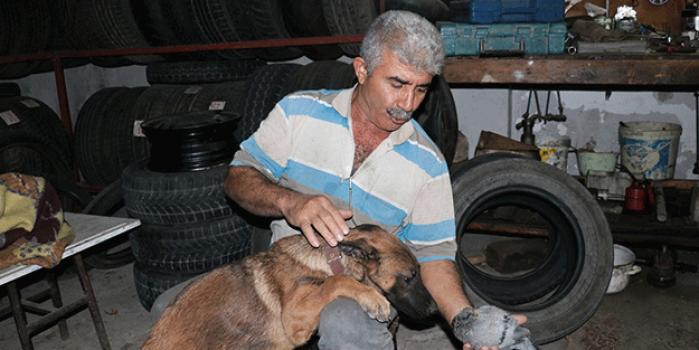 Güvercin ile köpeğin dostluğu yürekleri ısıttı