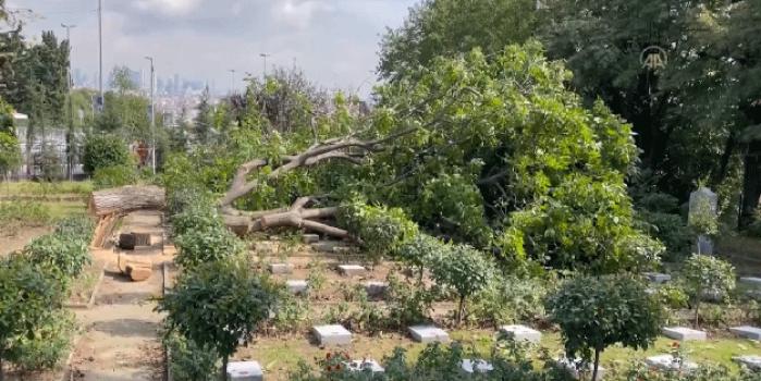 İBB'nin şehitlikte kestiği ağaç mezarların üstüne düştü