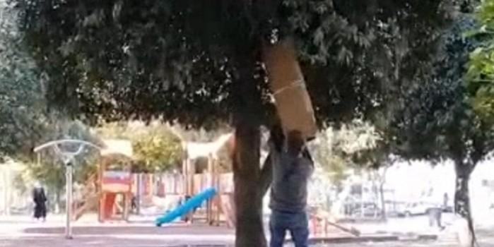 İstanbul'un göbeğinde hokus pokus! Ağacın içine giren çuvallar kayboluyor
