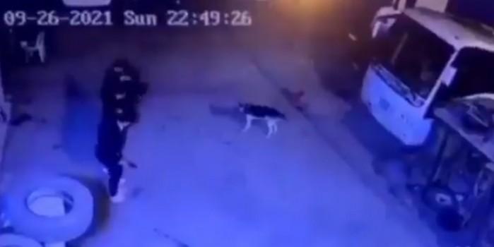 Köpekten halay çekerek kaçtılar