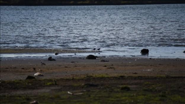 Kuraklık Çıldır Gölü'nün su seviyesini düşürdü
