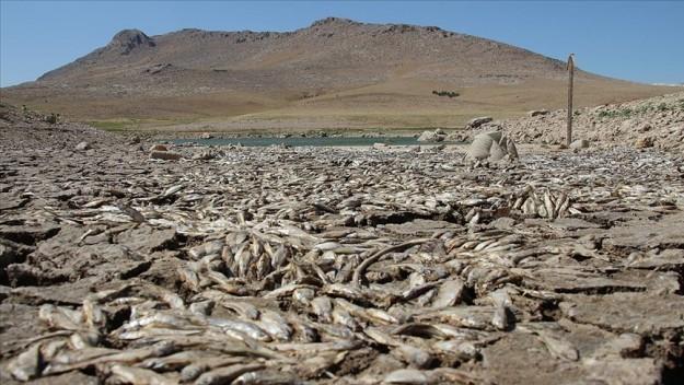 Kuraklık May Barajı'nda balık ölümlerine neden oldu