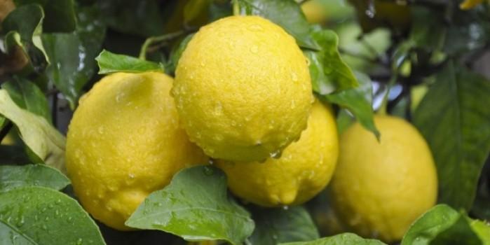 Lamas limonu coğrafi işaret tescil belgesi aldı
