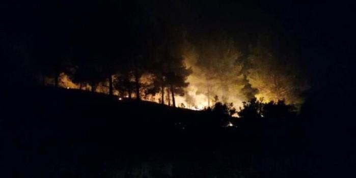 Manavgat'ta ormanlık alan alan alev alev yandı