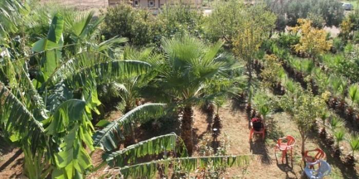 Mezopotamya ovasında Akdeniz iklimi meyveleri yetişmeye başladı