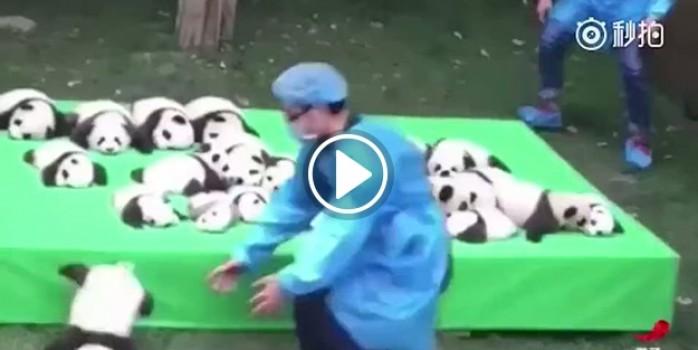 Pandalar rekor kırdı!