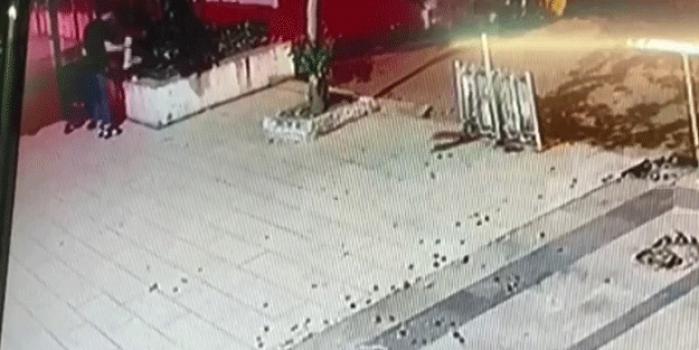 Sokak kedisini yerden yere vurdu! İnsan görünümlü şahıs tepki çekti