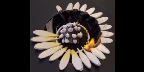 Tabaktaki görsel şölen