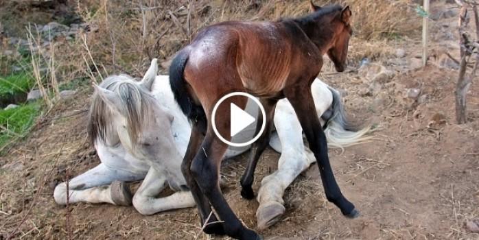 Yaralı at ölüme terk edildi