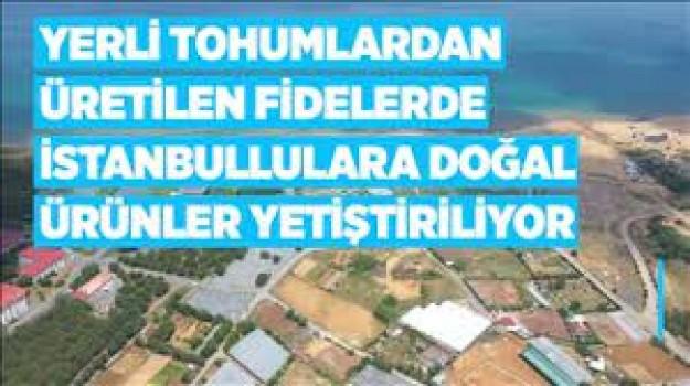 Yerli tohumlardan üretilen fidelerde İstanbullulara doğal ürünler yetiştiriliyor